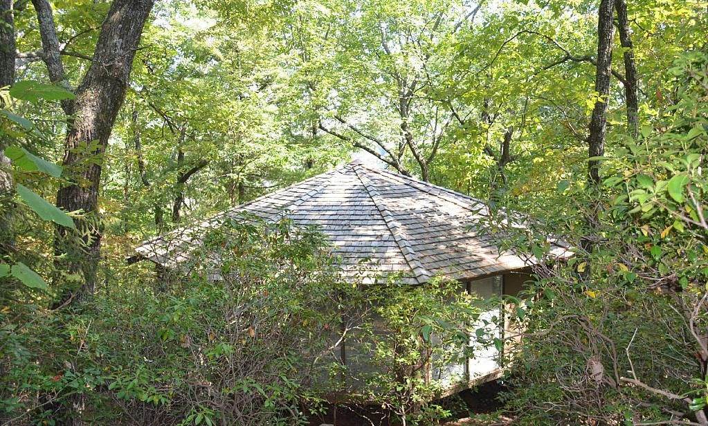 Tree House Treasure