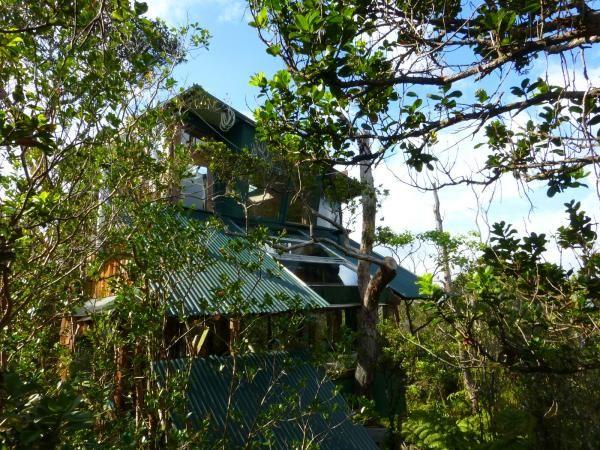 Volcano Treehouse #2