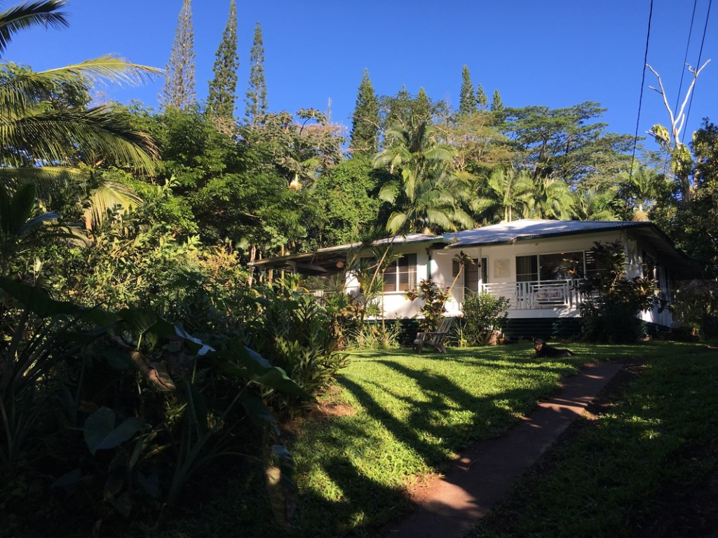 Jungle Farmhouse